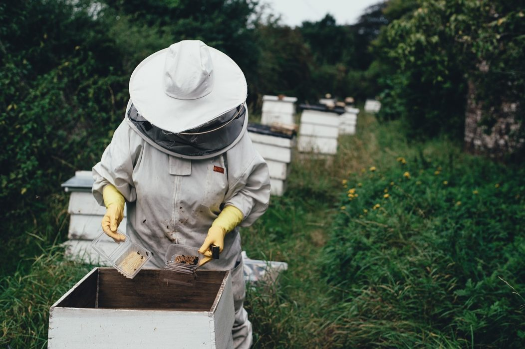 apiary-1866740_1280.jpg